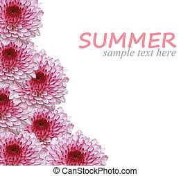 lato, kwiaty, odizolowany, tło