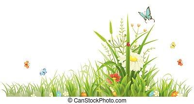 lato, kwiaty, zielony
