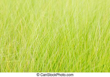 lato, natura, wiosna, abstrakcyjny, tło, trawa, albo