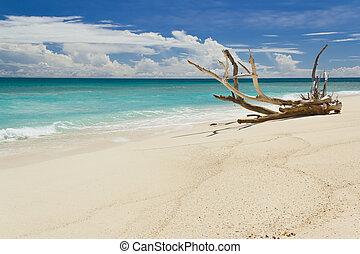 lato, pierwszy plan, wielki, słoneczny, zmarły, tropikalny, dzień, gałąź, plaża, piaszczysty