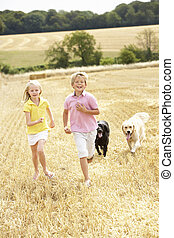 lato, pole, dzieci, zebrane żniwa, wyścigi, przez, psy