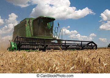lato, pszenica, żniwa, słoneczny, pole, połączyć, dzień