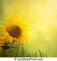 lato, słonecznik, tło