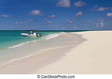 lato, słoneczny, tropikalna plaża, dzień, piaszczysty