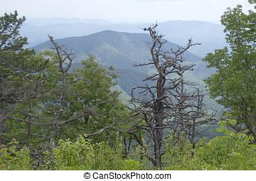lato, soczysty, góry, appalachian