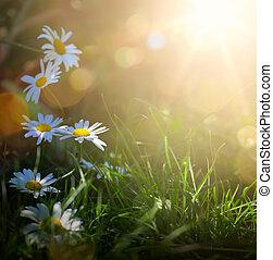 lato, sztuka, wiosna, abstrakcyjny, tło, świeże kwiecie, albo