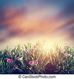 lato, trawa, łąka, rocznik wina, kwiaty, sunset.