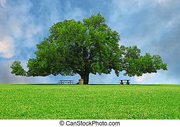 lato, używany, piknik, pokój, stoły, park, text., dąb, dzień, wielki, pole, cień, wspaniały, trawa, twój