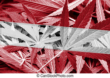 Latvia Flag on cannabis background. Drug policy....