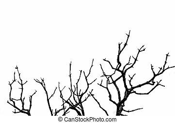laubbaum, silhouette