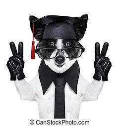 laureato, cane