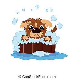 lava, barril, filhote cachorro