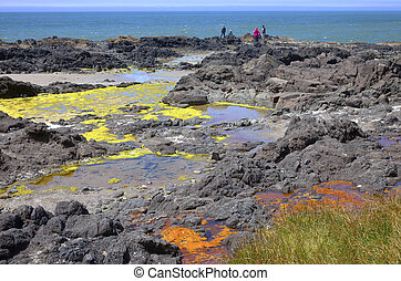 Lava beds algae and ocean, Oregon coast. - Lava beds...