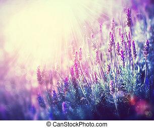 lavanda, fiori, field., crescente, e, azzurramento, lavanda