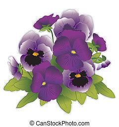 lavanda, y, púrpura, pensamiento, flores