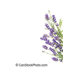 lavande, fond, floral, fleurs blanches, frontière