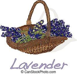 lavander, blomma, vector.