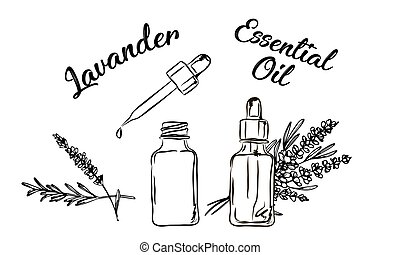 Lavander essential oil bottle and bunch of flowers hand ...