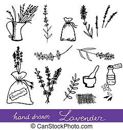 lavander, sätta, hand, oavgjord