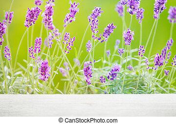 Lavandula flowers over grass.