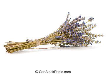 (lavandula, sopra, lavanda, fondo, bianco, angustifolia), mazzo