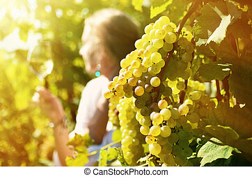 lavaux, dégustation, vineyards., suisse, girl, vin blanc