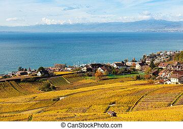 lavaux, région, de, -, terrasse, vignobles, suisse, lavaux