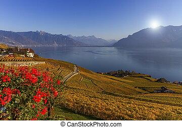 Lavaux region, Vaud, Switzerland - Lavaux region by autumn...