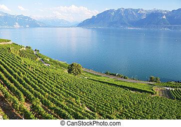 lavaux, vignobles, suisse, région