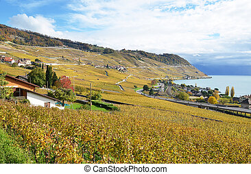 lavaux, vinhedos, suíça, região