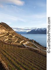 lavaux, vinice, uspořádat terasovitě, švýcarsko