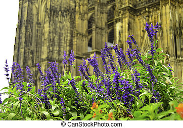 A view of lavendar bloosoms in front of Cathedral