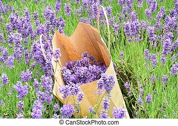 lavendar, buil