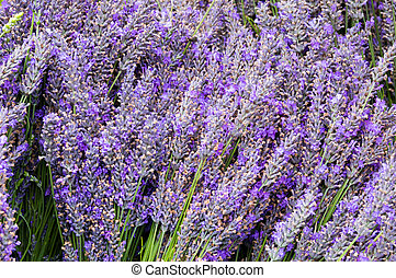 Bunches of lavendar flower stems on display at the farmers market
