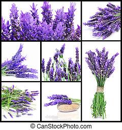 lavendel, blomster, collage