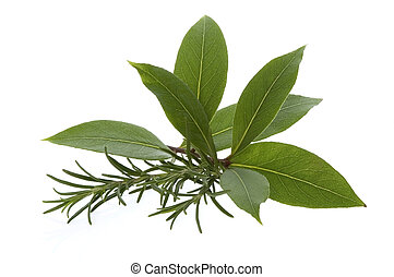 lavendel, vik, herbs., frisk, bladen, rosmarin