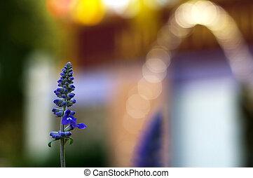 lavendelblauwe bloem, bokeh