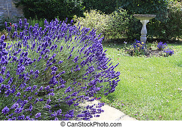 Lavender and bird bath
