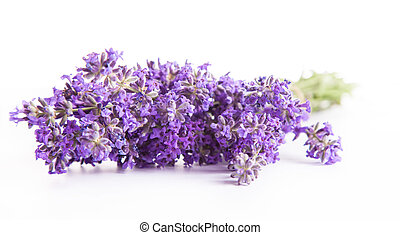 Lavender blossoms isolated on white background
