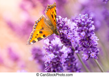 Lavender blossoms with butterfly