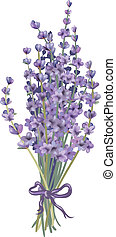Coloured lavender bouquet. Objects can be easily regrouped. Drawn with illustrator's brushes and gradient mesh.