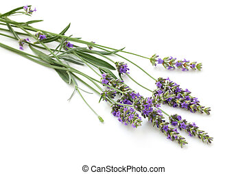 Lavender bouquet on white.
