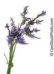Lavender Bundle - Bundleof Canarian lavender over white