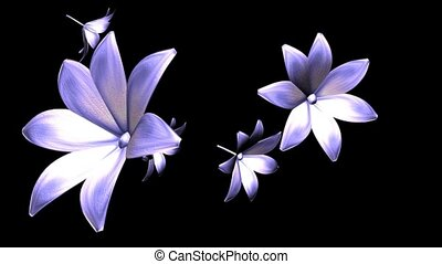 Lavender Daylilies