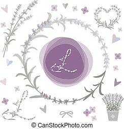 lavender., diseñe elementos, vector, colección
