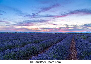Lavender field summer sunset landscape