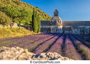 Lavender fields at Senanque monastery in Provence, France