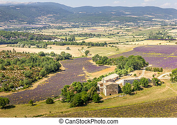 Lavender fields in the Provence region, France