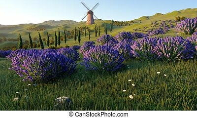 Lavender fields with a solitary windmill - Lavender fields...