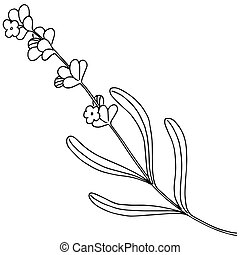 Lavender flower in a vector style isolated.